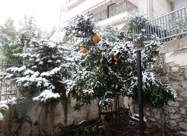 χιόνια, Λαμία
